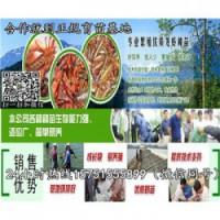 凤台县龙虾种苗价格……龙虾苗基地直销(包