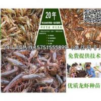 长寿龙虾种苗供应¥龙虾养殖技术指导